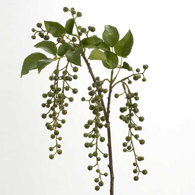 Branche Baie Latifolia