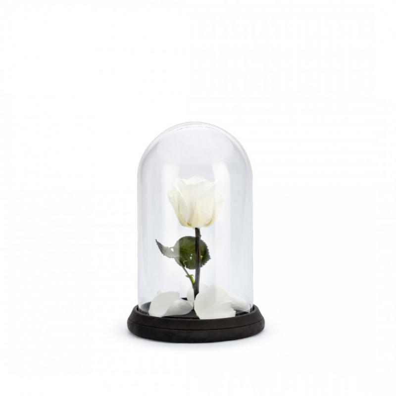 Cloche Rose Blanche