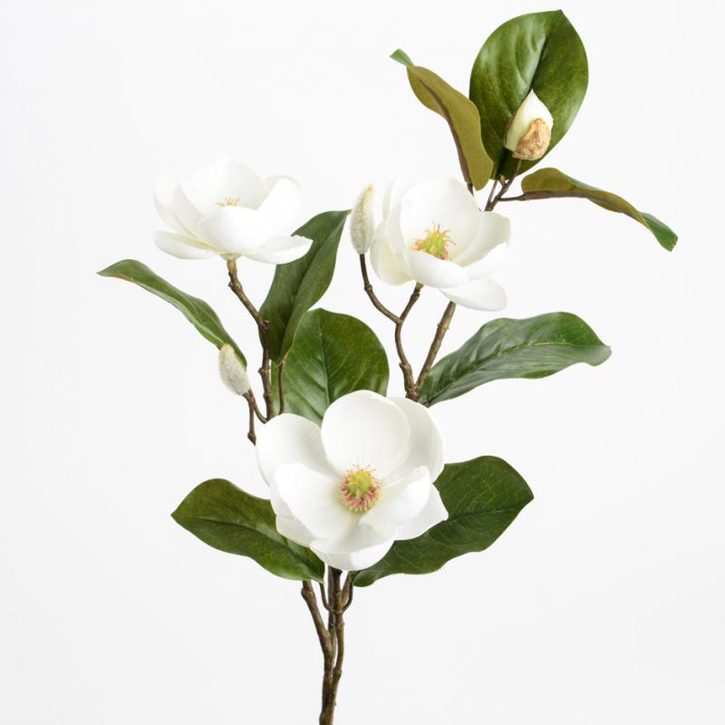Magnolia Victoria